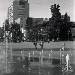 Image-(20)