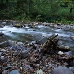 Река Мзымта, Краснодарский край, Сочи