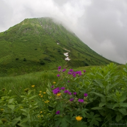 Цветение на Кавказе