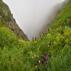 Туман на Кваказе