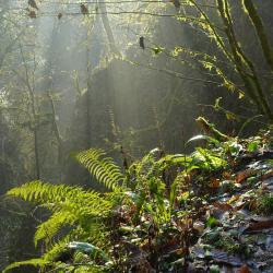 Реликтовый лес