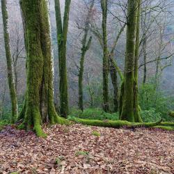 Реликтовый лес. Экопарк Ажек