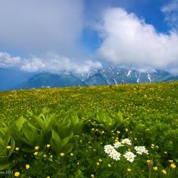 Цветение альпийских лугов на Кавказе