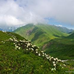 Кавказский Заповедник, цветение рододендронов