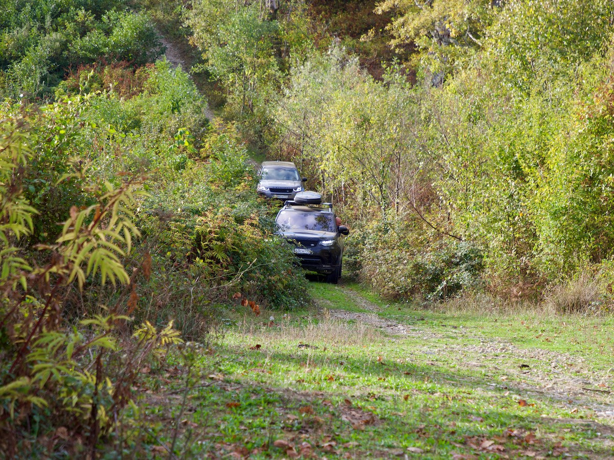 Land Rover едут по зарослям