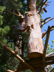 Бортевик на дереве, Бортевое пчеловодство