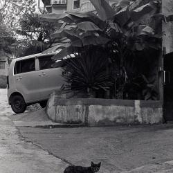 Сочинские котики