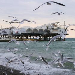 Чайки над Чёрным морем