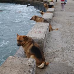 Собаки ловят волну