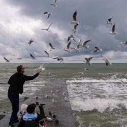 Чайки на набережной Сочи