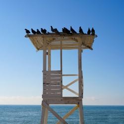 Морские голуби :). Сочи, 2 февраля 2018 г.
