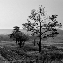 Приморский край, Уссурийский район, 2003 год