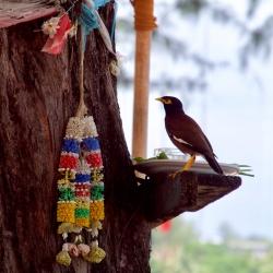 Кормушка для птиц - место подношения духам