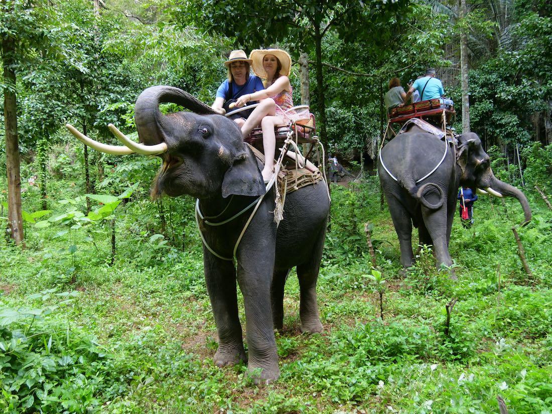 Прогулка на слонах по джунглям в Тайланде